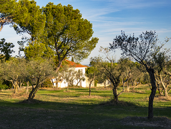 Photo of grounds at St. Paul de Mausole, Provence, France.