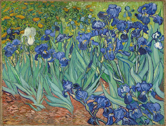 Irises oil painting by Vincent Van Gogh
