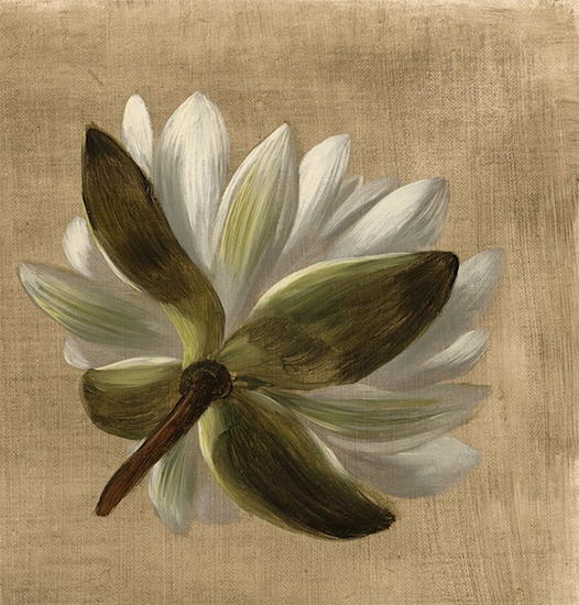 American Water Lily, William Jacob Hays